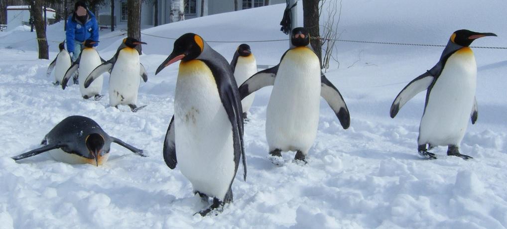 札幌雪まつり・定山渓・旭山動物園 2泊3日の旅